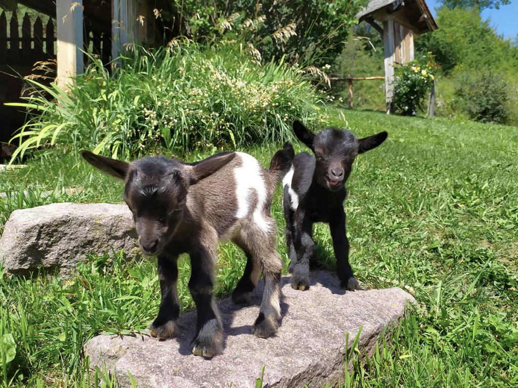 animali da fattoria vacanza in famiglia