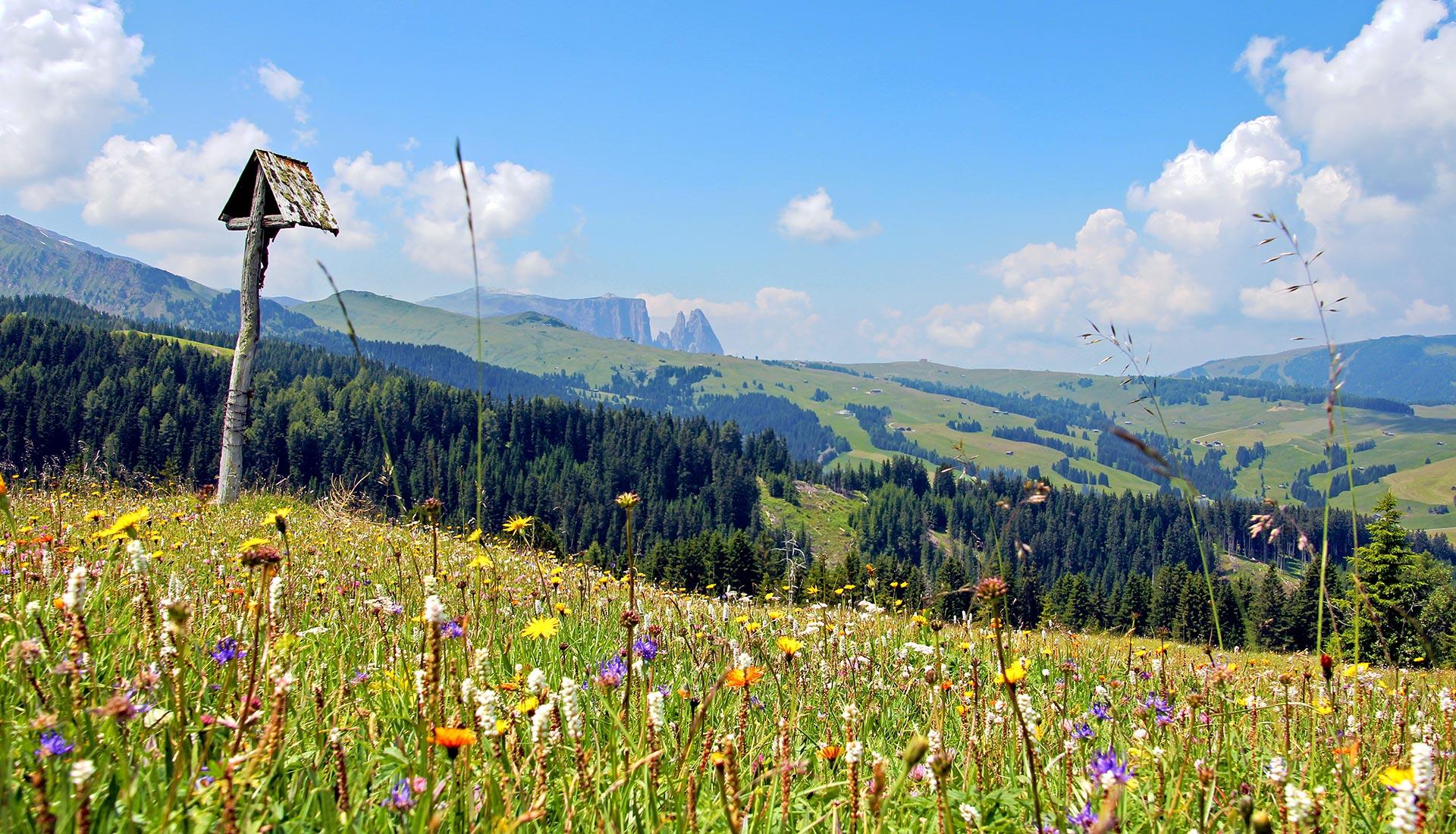 spring-alpe-di-siusi