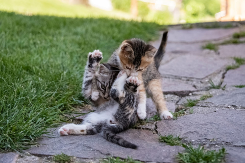 animali-gatti